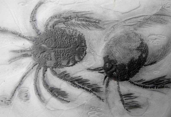 <b> water mites</b>