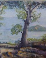 Polvese Island to Maggiore Island Lago Trasimeno