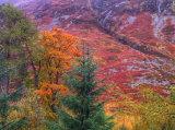 Glen Coe colour