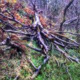 Glen Coe fallen tree