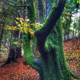 Glen Coe green tree