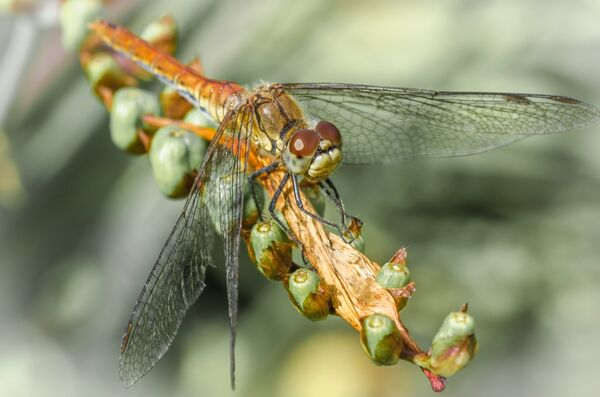 Imagine Dragonflies