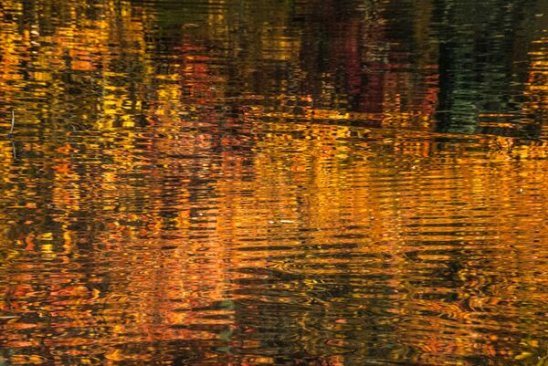 Shades of Autumn refelected