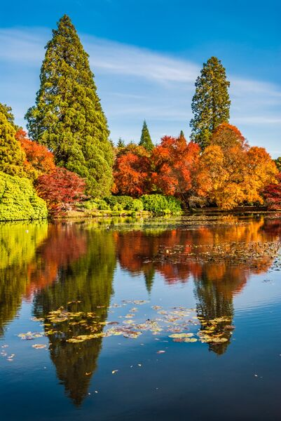 Lake reflections Sheffield Park East Sussex