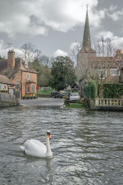 Swany river Eynsford Kent