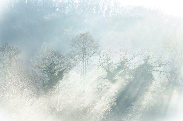 Light through the trees Somerset