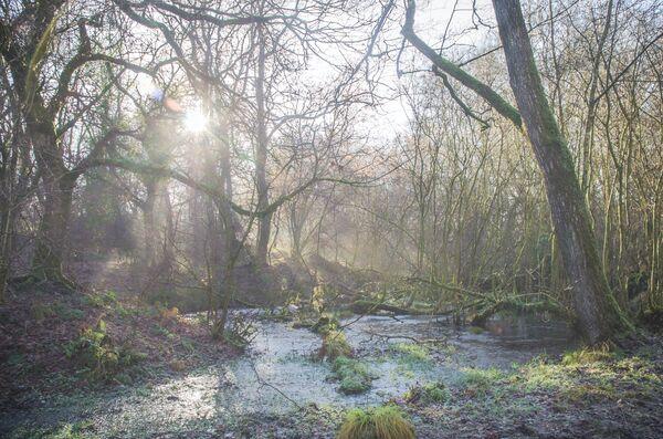 Winter light Somerset