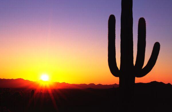 saguaro cactus Arizona USA