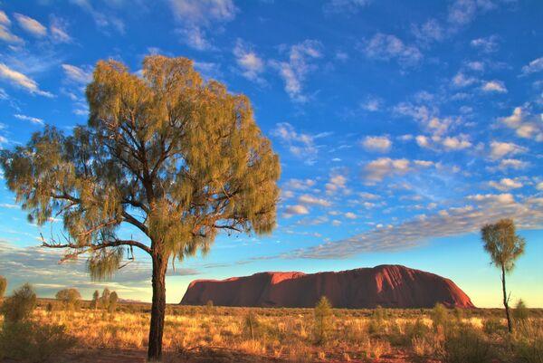 Uluru sunrise and trees Australia