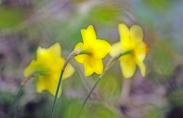Spring Impression