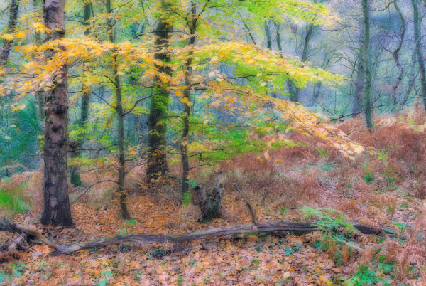 Autumn on the Ercall