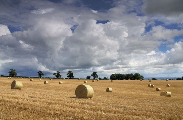 Shropshire Harvest #2