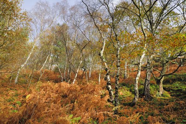 Wrekin Autumn