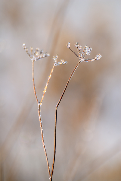 Frosted Jewels