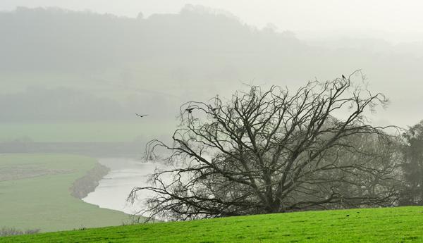 Leighton Mist