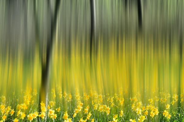 Spring Fantasy No2