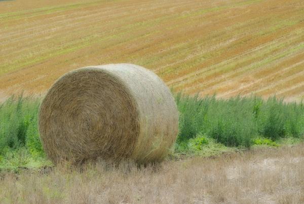 Harvest Patterns