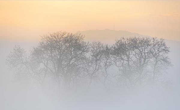 Wrekin Mist