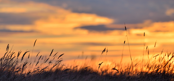 Sunset and Grasses