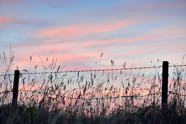 Grasses and Barbed Wire