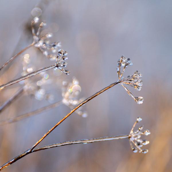 Winter's jewels