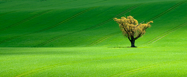 Tree and furrows