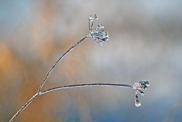 Winter's jewels #2
