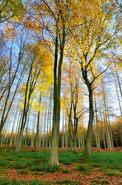 Autumn in Mortimer Forest