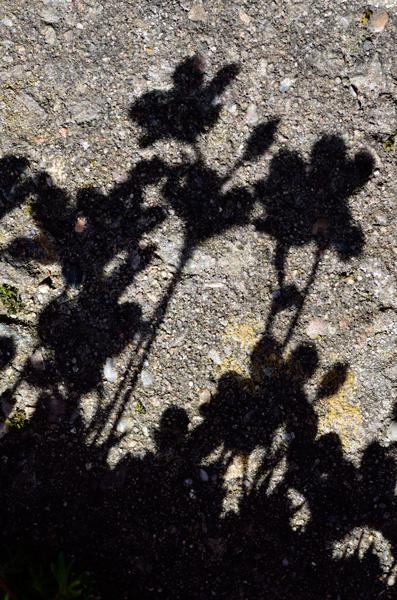 Patio Shadows