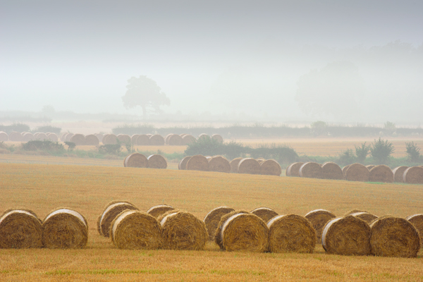Bales in the Mist
