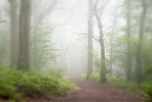 In to the Mist