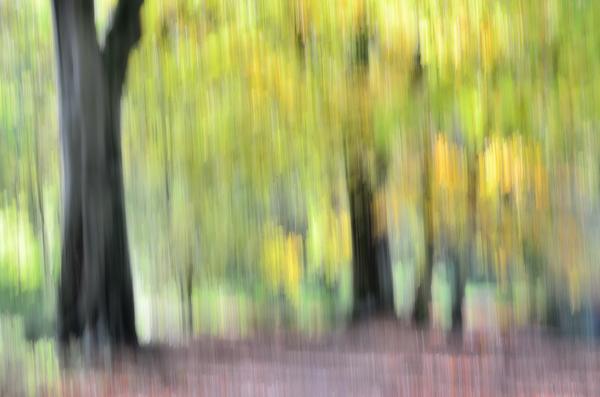 Beech Wood Impression