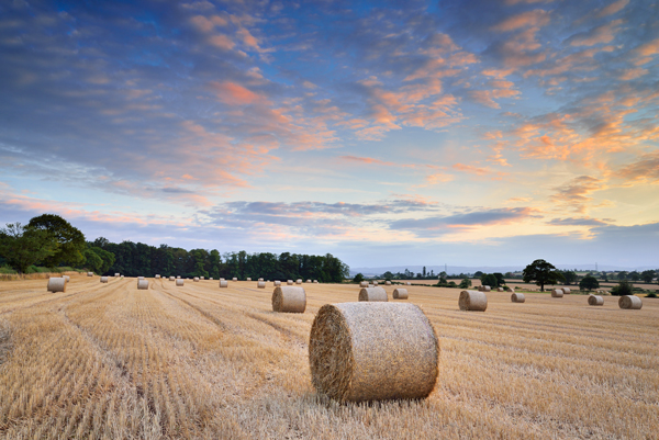 Harvest Sunset(No3)