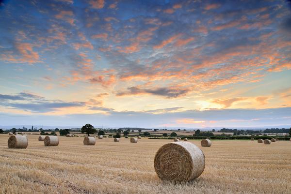 Harvest Sunset (No2)