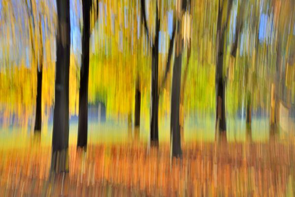 Shades of Autumn No2