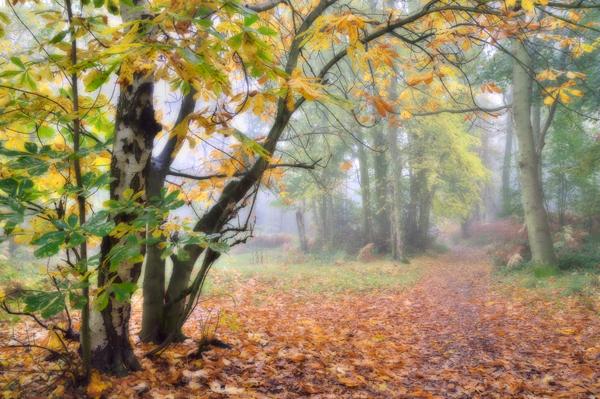 Path to the Wrekin