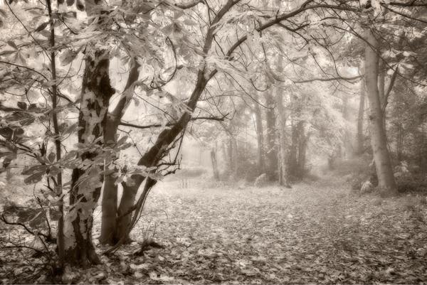 Path to the Wrekin No2