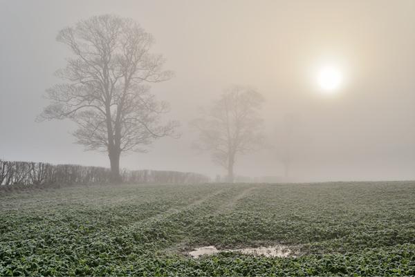 Through the Mist No2