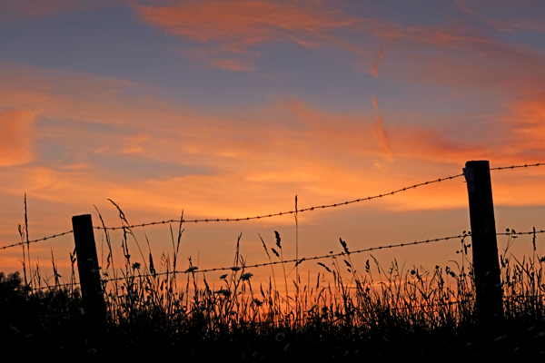 Barbwire and Grasses
