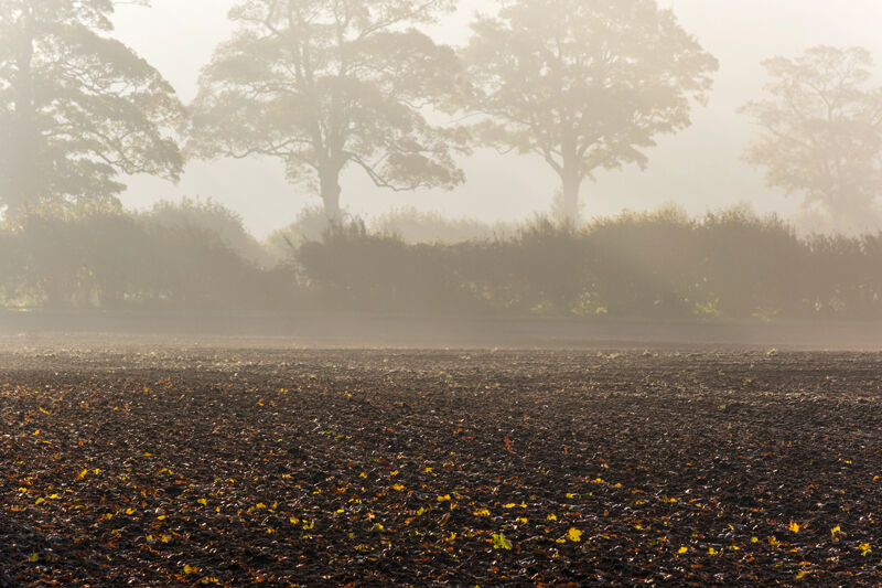 Furrows and Autumn Leaves
