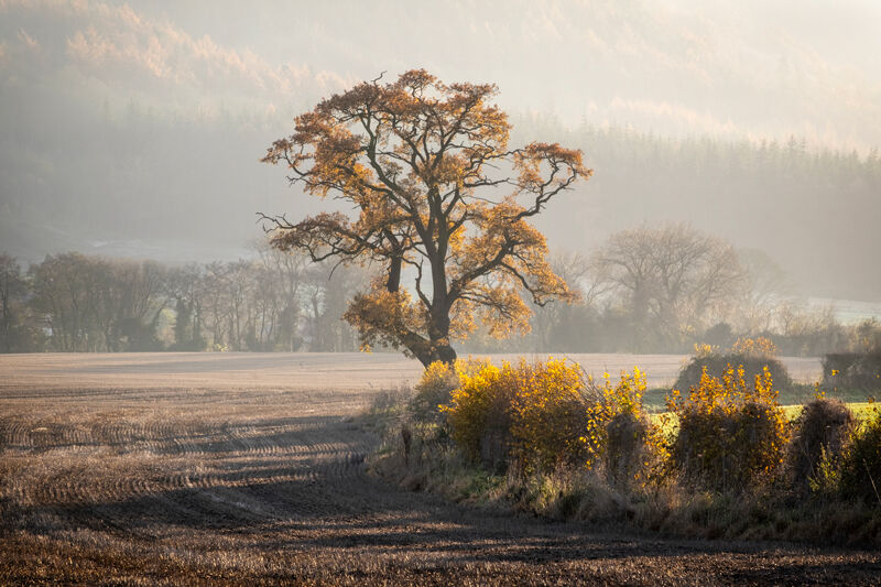 Autumn Mists