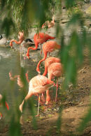 Flamingoland