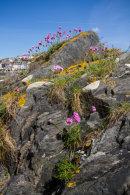 Mevagissey Rock