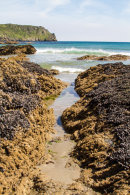 Cornwall Beach Mussel beds