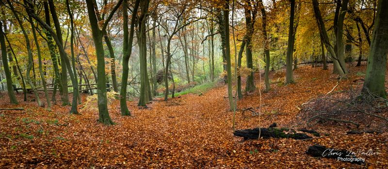 Whiteleaf Woods