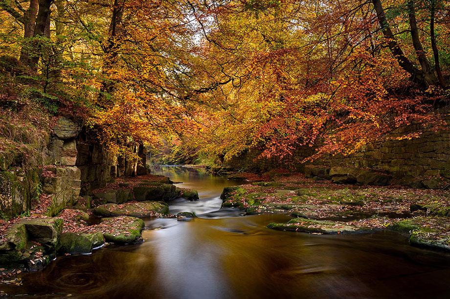 Derwent Autumn