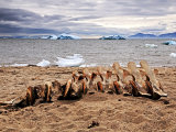Whale bones at Atanikerdluk #1