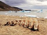 Whale bones at Atanikerdluk #2