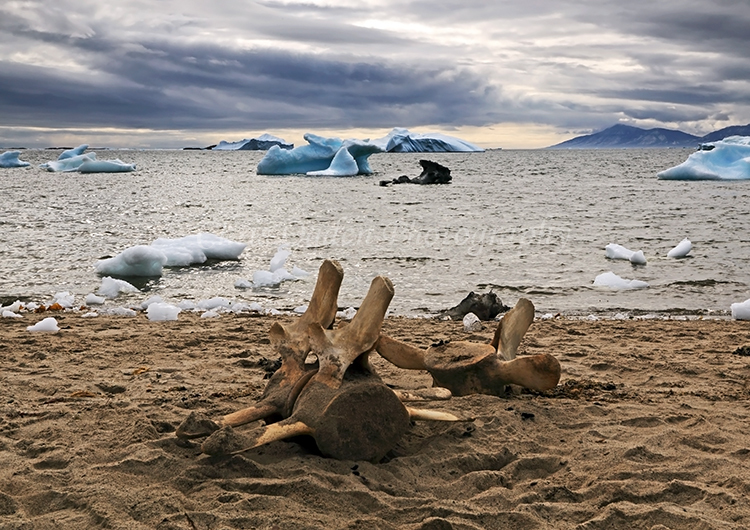 Whale bones at Atanikerdluk #3