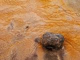 Geysir Geothermal Area #3